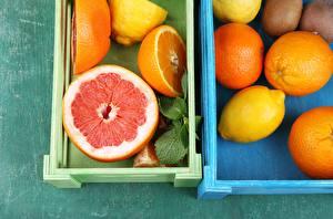 Фотографии Апельсин Лимоны Цитрусовые Грейпфрут