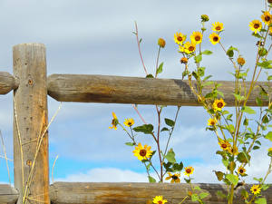 Фото Вблизи Ограда цветок