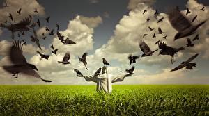 Фотографии Поля Скульптуры Птицы Вороны Облака Природа