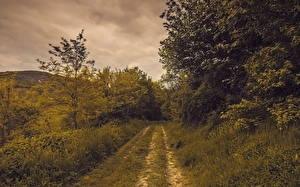 Картинки Лето Дороги Трава Природа