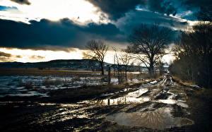 Фото Весна Дороги Пейзаж Деревья Грязь Природа