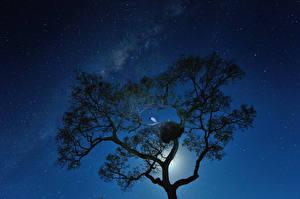 Фото Млечный Путь Звезды Деревьев Силуэты В ночи Космос