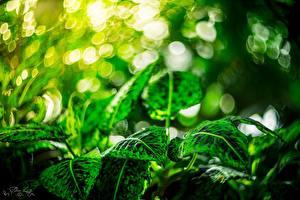 Обои Листья Зеленая Природа