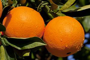 Картинка Апельсин Фрукты 2 Оранжевая Продукты питания