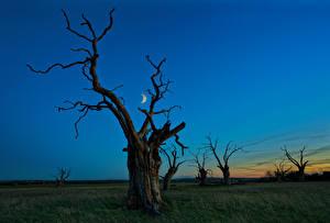 Фотографии Небо Деревья Ночные Луна Ветки Природа