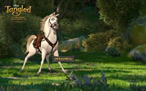 Обои Рапунцель. Запутанная история Лошадь Трава Maximus Мультфильмы