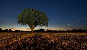 Картинка Поля Ночные Деревья Природа