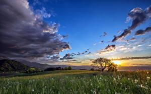 Фотографии Поля Одуванчики Небо Рассветы и закаты Тучи Облака Трава Природа