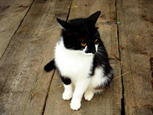 Картинки Коты Сидящие Доски Животные