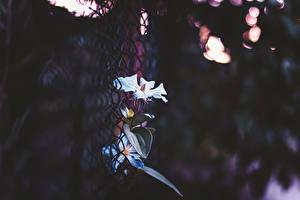 Фотография Крупным планом Забор цветок