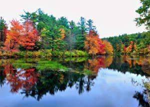 Фото Озеро Лес Осень Природа