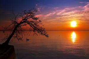 Обои Рассветы и закаты Озеро Деревья Силуэт Солнце Горизонт Природа