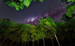 Фотография Млечный Путь Звезды Небо Ночь Деревья Природа Космос