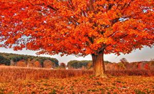 Картинка Осень Дерево Листва Оранжевый Природа
