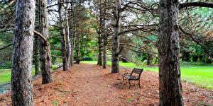 Фото Парки Деревья Скамья Ствол дерева Природа