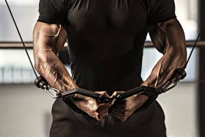 Картинка Мужчины Бодибилдинг Руки Мышцы Тренировка T-shirt muscles arms
