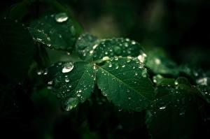 Картинка Крупным планом Лист Зеленых Капли Природа