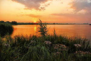 Фото Россия Рассвет и закат Реки Пейзаж Траве Ural Природа
