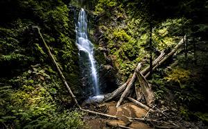 Обои США Водопады Леса Калифорния Berry Creek Falls Природа фото