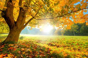 Фотография Времена года Осень Ствол дерева Листья Трава Деревья Природа