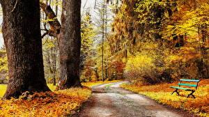 Обои Осень Парки Ствол дерева Скамейка Природа