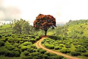 Фотографии Дороги Лето Кусты Дерево Природа