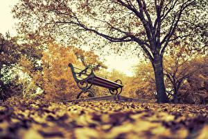 Фотография Парки Осень Скамья Дерева Природа
