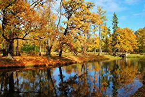 Обои для рабочего стола Россия Парк Осень Река Дерево Пушкин (Царское Село) Александровский парк Природа