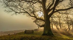Фотографии Туман Деревья Пляж Скамейка Ствол дерева На ветке Природа