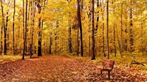 Обои Осенние Парки Листья Скамья Дерева Природа