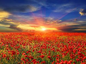 Фотография Пейзаж Поля Маки Рассветы и закаты Небо Красный Облака Цветы Природа