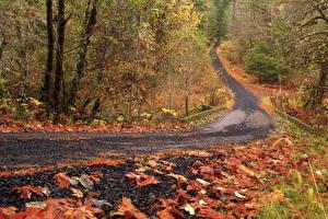Фотографии Сезон года Осень Леса Дороги Листва Природа