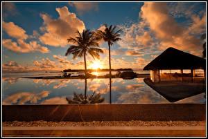 Фотография Мальдивы Рассветы и закаты Небо Пальмы Облака Природа