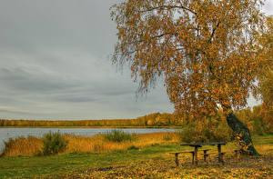 Картинки Сезон года Осенние Реки Деревья Скамейка Березы Природа