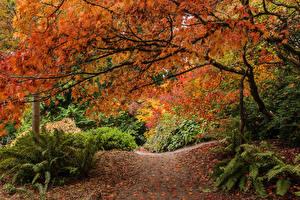 Обои Сезон года Осенние Сиэтл Тропа Ветвь Washington Park Arboretum Природа