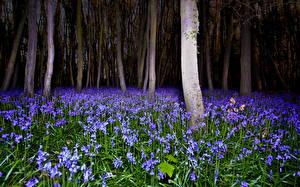 Обои Леса Луга Ночные Деревья Природа