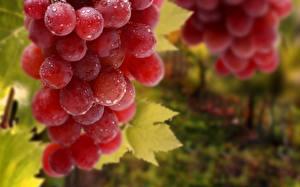 Картинки Виноград Крупным планом Капли Продукты питания