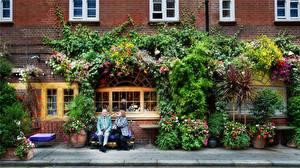 Фотография Дома Окно Скамейка Улице building bricks people flowers plants windows white sidewalk город