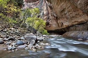 Фотографии Штаты Река Камни Зайон национальнай парк Каньон Скала Utah