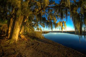 Обои США Реки Побережье Деревья HDR Ветки Bryan Georgia Природа фото