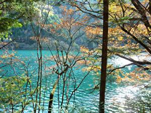 Обои Китай Парки Реки Осень Цзючжайгоу парк Ствол дерева Природа фото