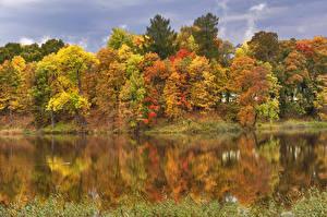 Картинка Россия Санкт-Петербург Осень Реки Деревья Pavlovsk Природа