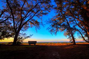 Картинки Пейзаж Рассветы и закаты Дерево Скамья Ветки Природа