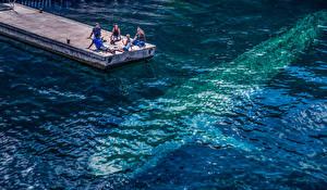 Картинки Пристань Море Воде Andrés Nieto Porras Животные