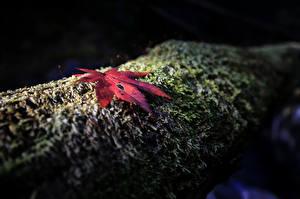 Картинка Вблизи Листья Мох Ночные Природа
