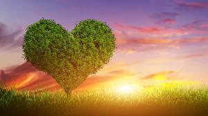 Фотографии Рассветы и закаты Любовь Небо Деревья Сердце Природа