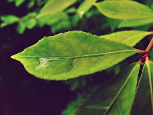 Обои Вода Вблизи Листва Зеленых Природа