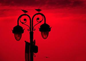 Картинка Птица Уличные фонари Силуэты Красная