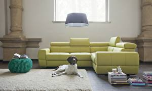 Картинка Собаки Интерьер Гостиная Комната Диван Спаниель Животные