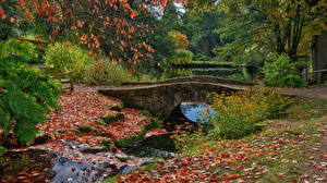 Картинка Англия Парки Пруд Мосты Осенние Листва Ardingly Природа